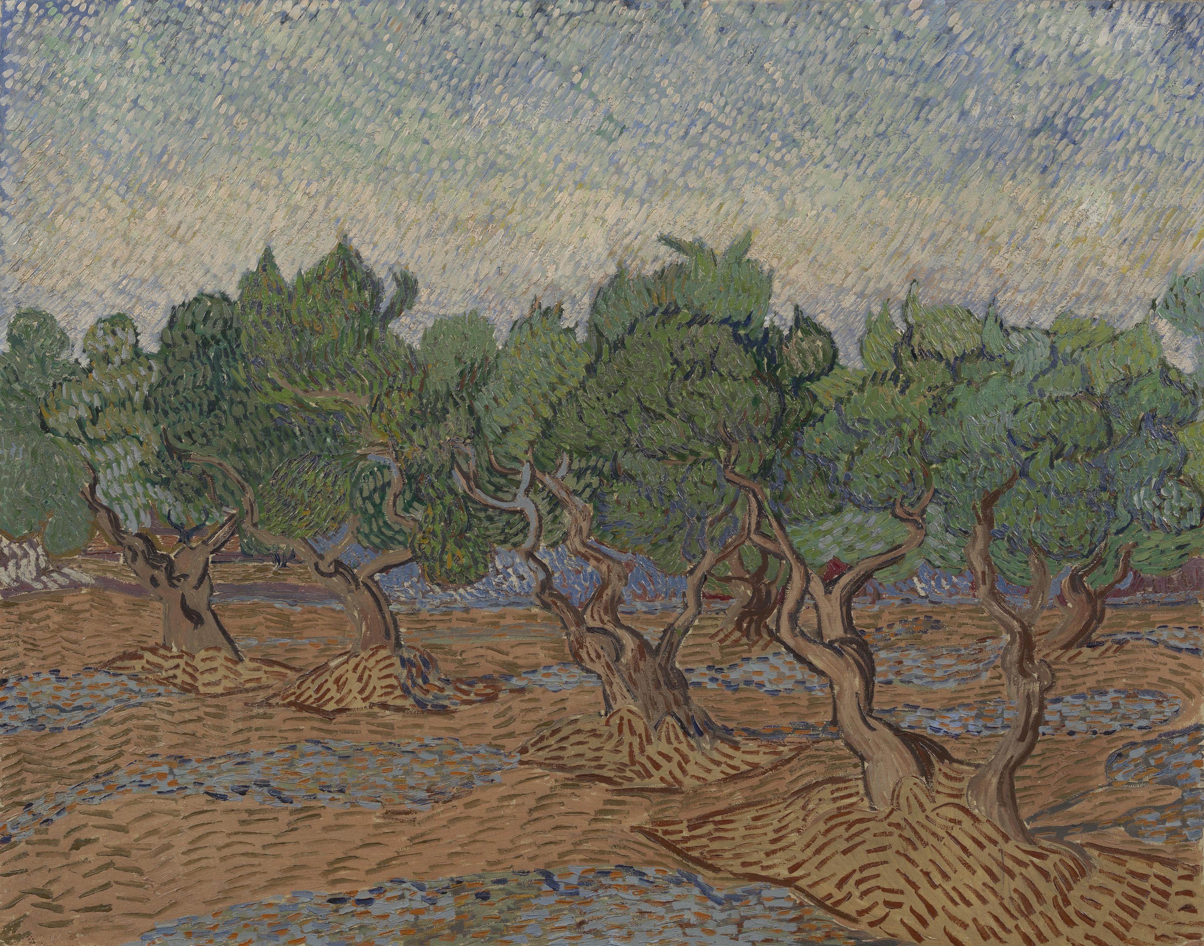Van Gogh Olive Groves